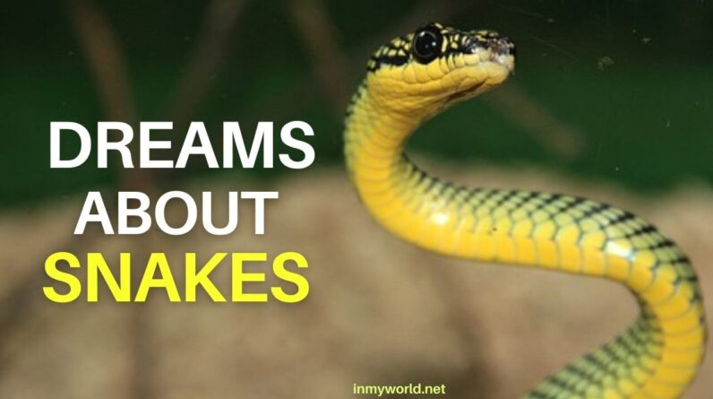 Dream about snakes