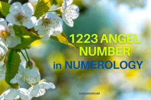 1223 angel number in numerology
