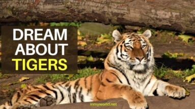 Dream about Tigers