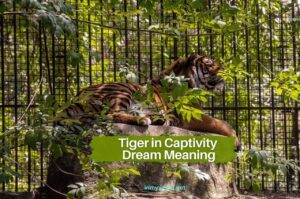 Tiger in captivity dream meaning