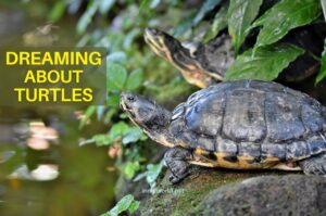 Dreaming about Turtles