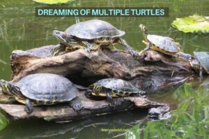 Dreaming of Many Turtles