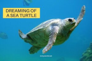 What does the sea turtle symbolize