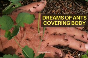 Dreams of ants covering