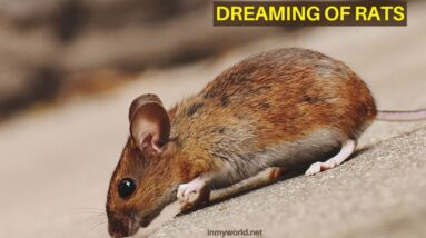 Dreaming of Rats