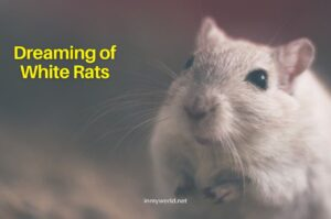 Dreaming of White Rats